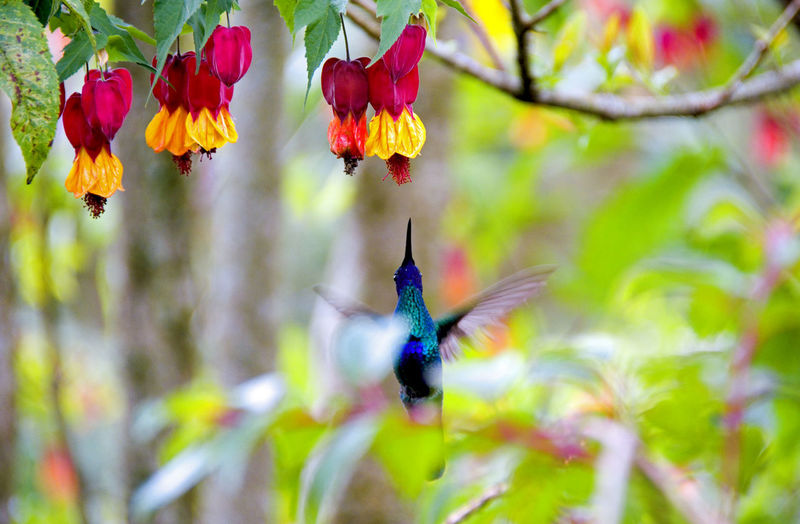 Hummingbird Bird Photography Nature Photography Wildlife Photography Animal Themes Animal Wildlife Animals In The Wild Beauty In Nature Bnw_nature Close-up Flower Fragility Hummingbird Nature Polinization Vulnerability