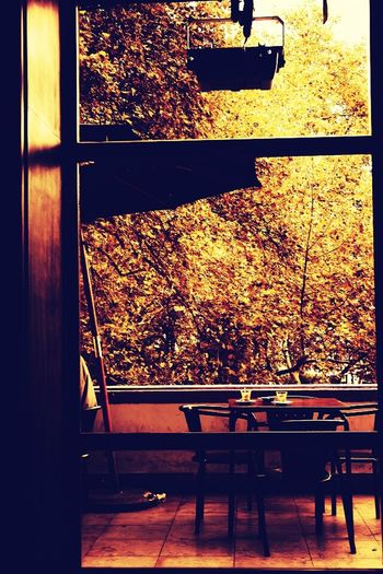 Trees Restaurant Autumn Colors Taking A Coffee