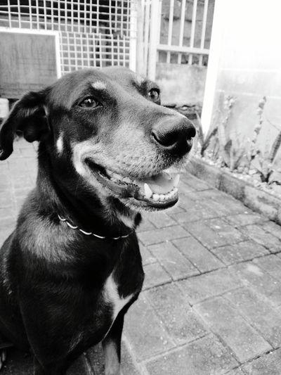Doge Pets Dog One Animal Domestic Animals Animal Themes Mammal Day Close-up Outdoors No People Black & White Blackandwhite