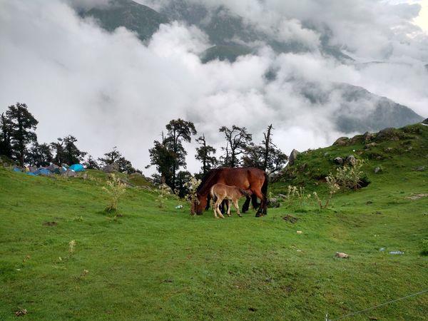 Motherlove Horses Himalayas Nature Clouds