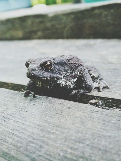 Frog EyeEm Animal Lover EyeEm Nature Lover Summer2014