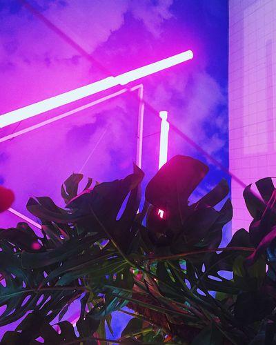 Illuminated No People Leaf Nightlife Neon Neon Lights