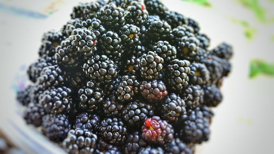 Wild foraged blackberries, Columbia SC Berries Blackberries Foraged South Carolina