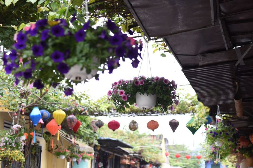 Beautiful View Lantern Colorful Nostalgic Landscape Old Town Flower Hanging Day Outdoors Built Structure Building Exterior Architecture
