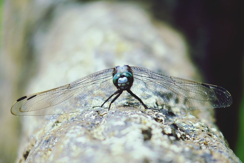 Nature Outdoors No People Close-up Insect Dragonfly One Animal Day Tree