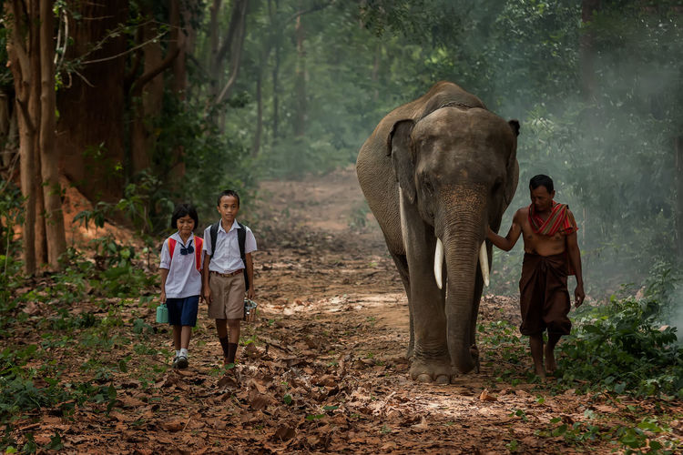Asian students with their father walking go to school with their elephant. Adult Animal Wildlife Animals In The Wild Elephant Forest Full Length Group Of People Land Males  Mammal Mature Men Men Mid Adult Nature Outdoors Standing Togetherness Tree WoodLand