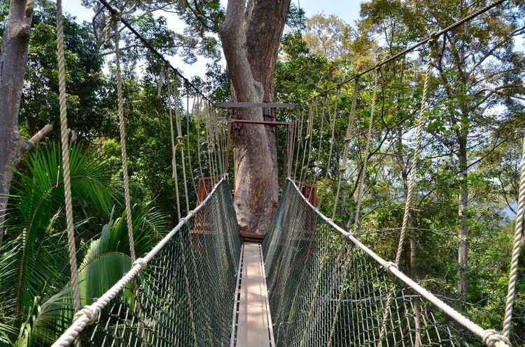 Adventure Canopy Canopy Of Trees Canopy Walk Eye4photography  Forest Jungle Malaysia Nature Nature Photography Rain Forest Taman Negara The Way Forward Tree Colour Of Life EyeEm Best Shots Traveling Eye4photography  EyeEm Nature Lover Travel Travel Photography Travel Destinations