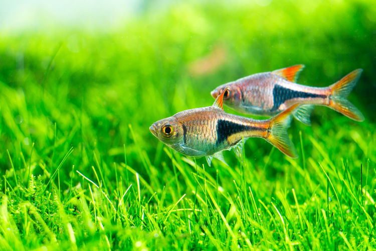 Close-up of fish on grassy field