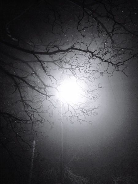 Bare Tree Nature Tranquility Tree Sky Tranquil Scene Scenics No People Beauty In Nature Silhouette Branch Outdoors Lens Lens Flare EyeEm EyeEm Best Shots Low Angle View Night Astronomy