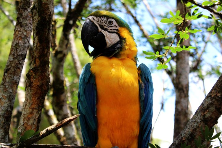 Tree One Animal Bird Animal Wildlife Branch Beauty In Nature Parrot Multi Colored Outdoors