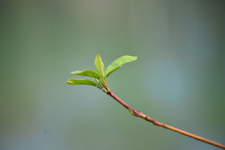 Green Color Plant Part Growth Plant Leaf Beauty In Nature Nature Close-up Beginnings No People Focus On Foreground Day Plant Stem Vulnerability  Outdoors Fragility New Life Selective Focus Tranquility Twig