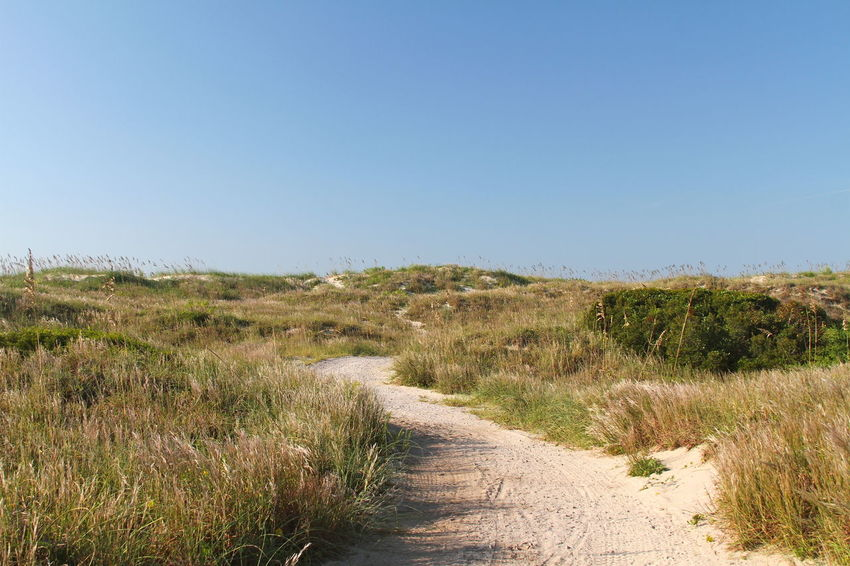 North Carolina Outer Banks, NC Blue Clear Sky Copy Space Day Dirt Road Field Footpath Grass Growth Landscape Nature No People Outdoors Pattern Sand Dune Scenics Sky Sunny The Way Forward Trail Tranquil Scene Tranquility Uncultivated