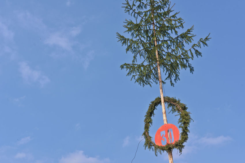 30 30 Years Blue Branch Clear Sky Cloud Cloud - Sky Communication Day Flag Hanging Happy Birthday High Section Low Angle View Nature No People Outdoors Pole Red Sky Text Tree Western Script