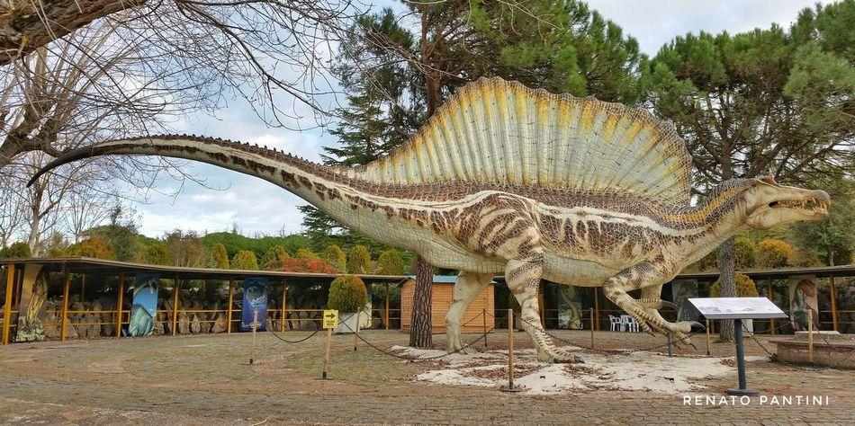 Spinosaurus aegyptiacus Dinosauro Dinosauri Dinosaur Dinosaurs Dinosaurpark Spinosaurus Spinosauro Chianciano Terme