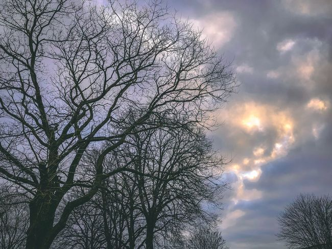 Tree Bare Tree Sky Low Angle View Branch Nature Beauty In Nature Outdoors No People Cloud - Sky Tranquility Scenics Day