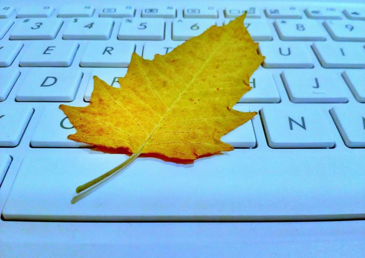 Leaf Autumn Close-up Leaf On Keyboard Leaf 🍂 Dry Leaf Conceptual Photography  Studio Shot Keyboard Computer Motorola Photography MotoE Mobile Photography Beauty In Nature EyeEm Concept Photography Paint The Town Yellow