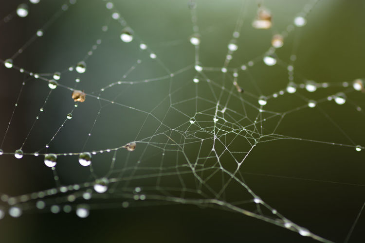 Spiderweb Animal Animal Leg Animal Themes Arachnid Arthropod Beauty In Nature Close-up Complexity Day Drop Focus On Foreground Fragility Natural Pattern Nature No People Outdoors Selective Focus Spider Spider Web Vulnerability  Water Web