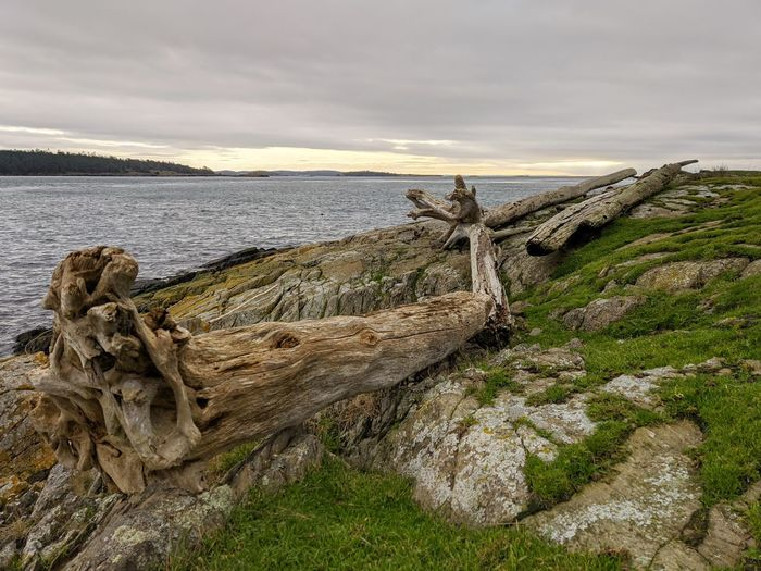 View of driftwood on land against sky