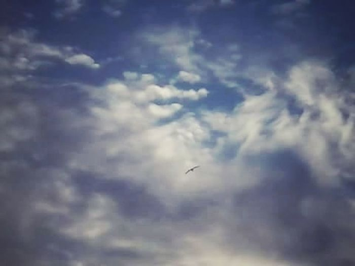 Cloud - Sky No People Bird Animal Themes Nature Day Sky Photography Photo Constitución, Chile Low Angle View