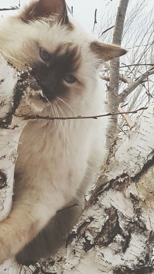 Mammal Animal One Animal Domestic Cat Domestic Animals Animal Themes Pets No People Outdoors Nature Day Tree Leaf Beauty In Nature Nature Best Photos Newest Talent