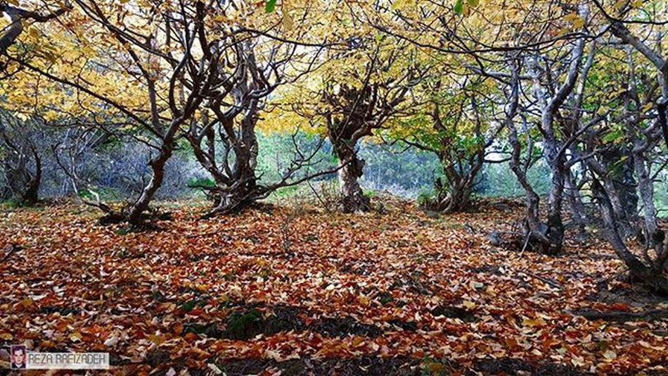 Nature Roud Fall Automn Tree Poonel Iran