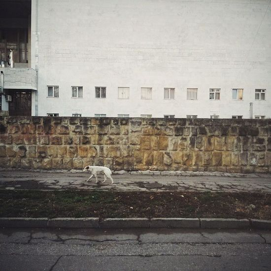 Stray dog running near Theatre of Opera and Ballet. Chisinau. Moldova. Dog Straydogs Moldova Chişinău everydaymoldova everydayeasterneurope
