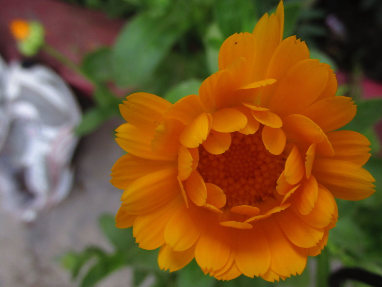 flower, petal, flower head, fragility, beauty in nature, nature, freshness, plant, blooming, yellow, growth, close-up, focus on foreground, outdoors, day, park - man made space, no people
