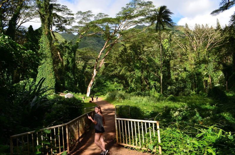 Enjoy The New Normal Tree Hawaii Manoafalls Life Forest