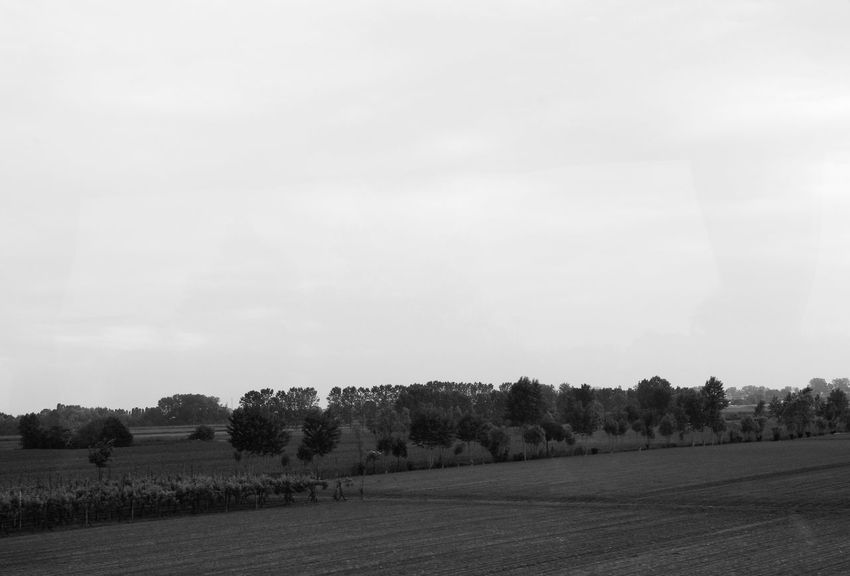 Agriculture Beauty In Nature Blackandwhite Clear Sky Countryside Cultivated Cultivated Land Day Farm Field Growth Landscape Nature No People Non-urban Scene Outdoors Plowed Field Remote Rural Scene Scenics Sky Solitude Tranquil Scene Tranquility Tree