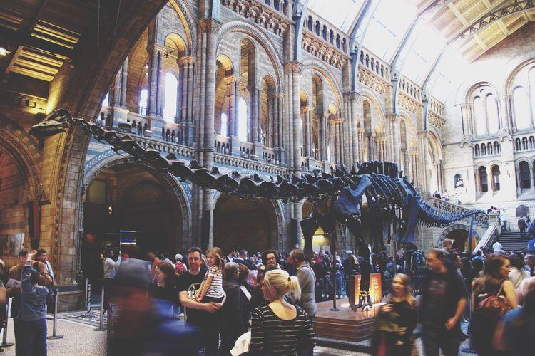 Natural History Museum London United Kingdom Dinosaur Diplodocus Hintze Hall Museum Nature Ancient Jurassic Skelton London Lifestyle