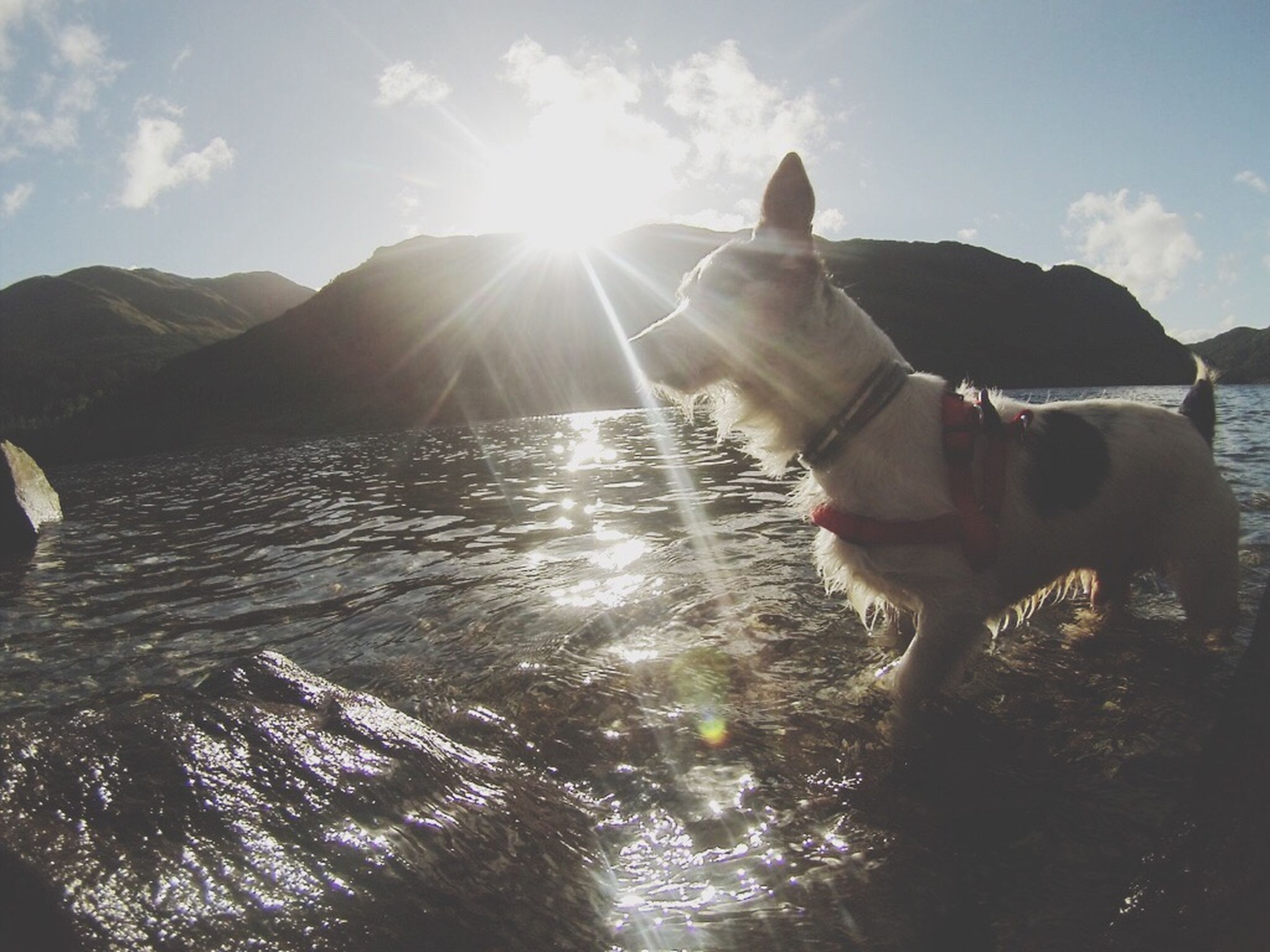 sun, sunbeam, sunlight, water, lens flare, sky, domestic animals, animal themes, mammal, one animal, dog, pets, sunny, reflection, nature, mountain, tranquility, tranquil scene, beauty in nature, day