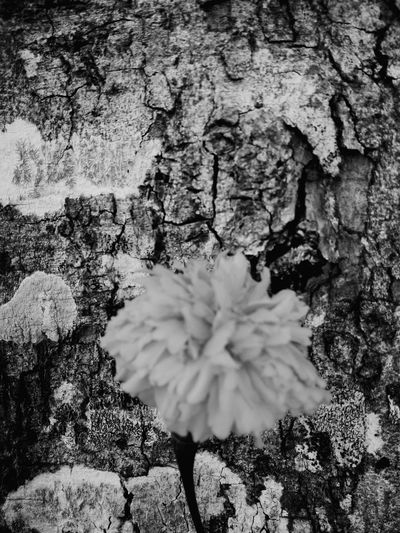 Textured  Close-up Nature Day No People Full Frame Growth Tree Trunk Fragility Beauty In Nature