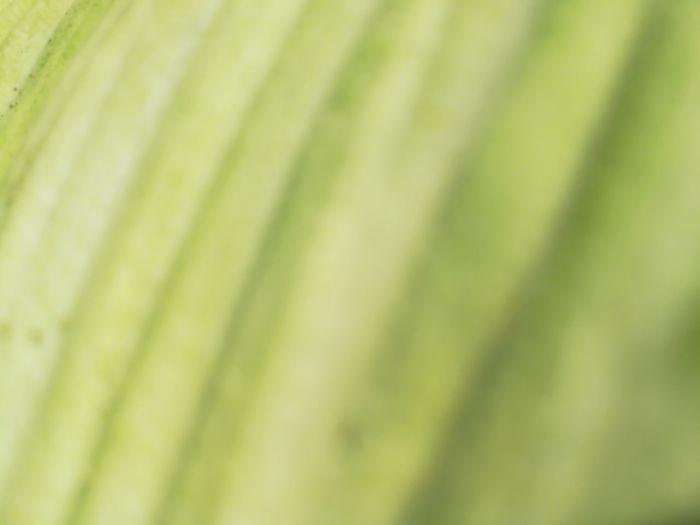 Full frame shot of green leaf