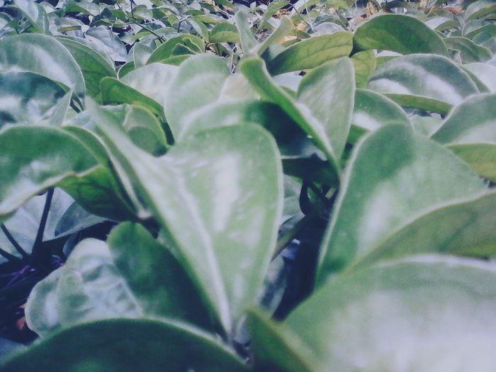 Leaves 🌿🌿