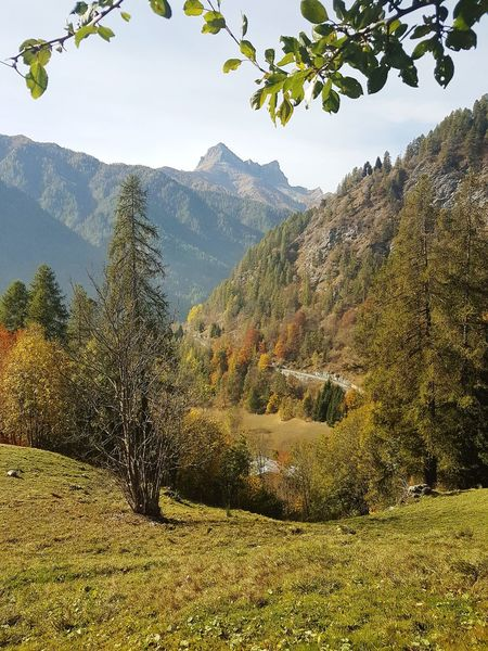 Autumn Autumn Colors Mountain Range Nature Tranquility Silence Beauty In Nature Travel Destination Mountain View Trees And Nature Idyllic Place Mountain Nature Tree Outdoors Day Mountain Range Landscape