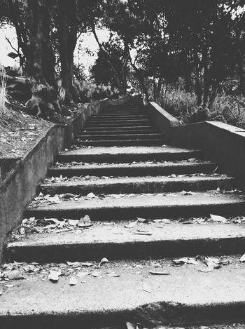 Estas escaleras se puede tomar como la forma de una vida tienes toda la intencion de llegar al final pero a medida que avanzas ya no quieres seguir subiendo y todo a tu alrededor se va marchitando. Dark Addiction Black & White Gothic Hanging Out Taking Photos Check This Out Darkness And Light Black Forest Blanco & Negro  Oscuro Autumn Escaleras Stairs