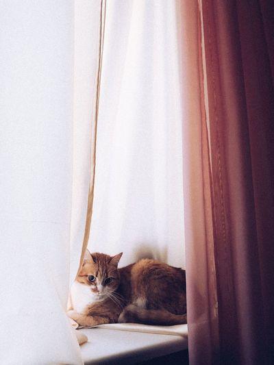 Portrait of cat peeking through window