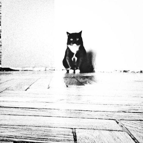 Mycat♥ Followme