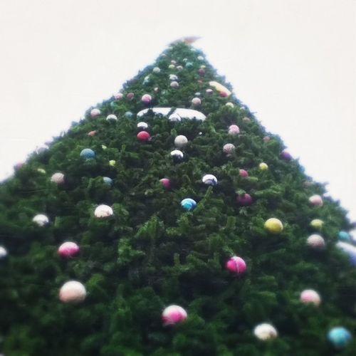 Christmas Tree. Chiang Mai | Thailand Chirstmas Tree Hipstamatic Oggling