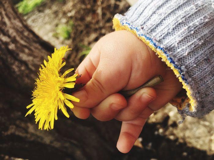 Flower Babyshand
