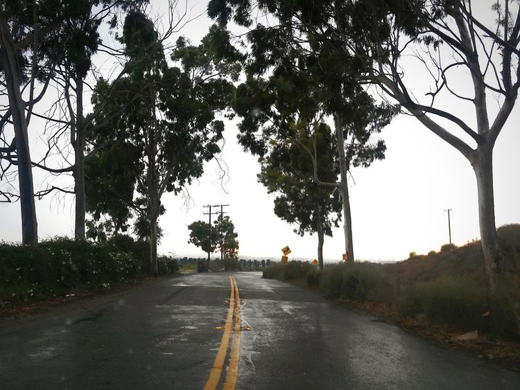 The Way Forward Tree The Way Forward Road Transportation Nature Sky Horizontal No People Outdoors Beauty In Nature Day Outskirts Of Town Rainy Day Photography Rainy Sky Irvine, California. Wet Roads Tree Rainy Sunday Streets Without People Tranquil Scene Afternoon Light Street Photo Streetphotography Landscape