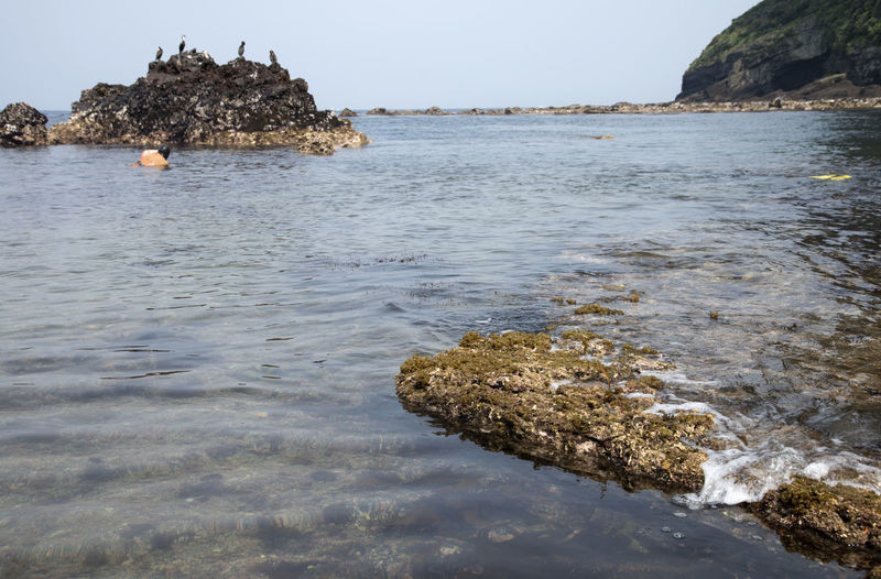 haenyeo who is a female diver picking up sea weed and sea food Architecture Beach Beauty In Nature Cliff Day Female Diving Duck Haenyeo JEJU ISLAND  Nature No People Outdoors Rock - Object Rock Formation Scenics Sea Seaside Sky Tranquility Vacations Water Waterfront Wave
