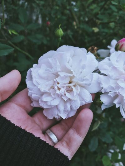 «tal vez sea para siempre» Intentotumblr Intento Tumblr 😂 Tumblr Flowers Vscogood Vscocam VSCO Photographing Photographer Photo Photography Photooftheday Human Hand Hand Flower Flowering Plant Plant Human Body Part One Person