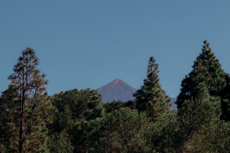 Tree Plant Sky Tranquility Beauty In Nature Tranquil Scene No People Mountain Growth Scenics - Nature Nature Clear Sky Day Land Blue Non-urban Scene Landscape Environment Outdoors Forest Mountain Peak Coniferous Tree Teide National Park Tenerife