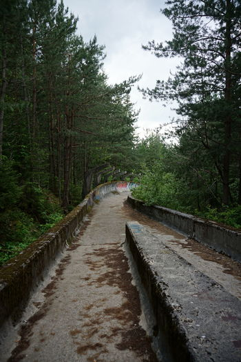 Narrow road along trees and plants in forest