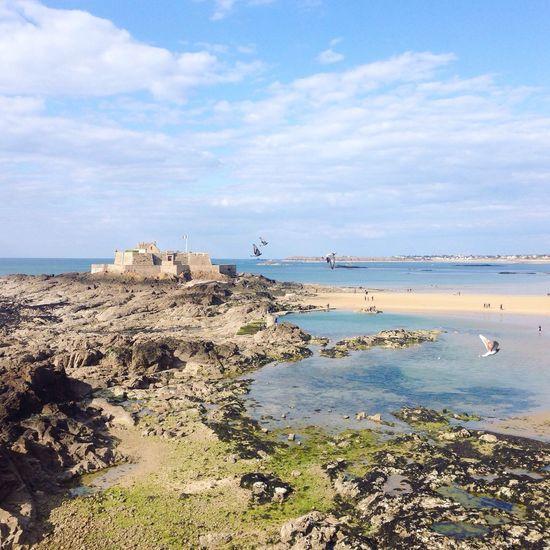 Birds Bretagne