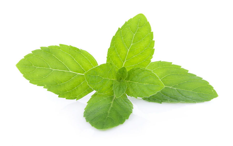 Peppermint on white background Food Food And Drink Herb Ingredient Leaf Nature Peppermint Peppermint Plant White Background