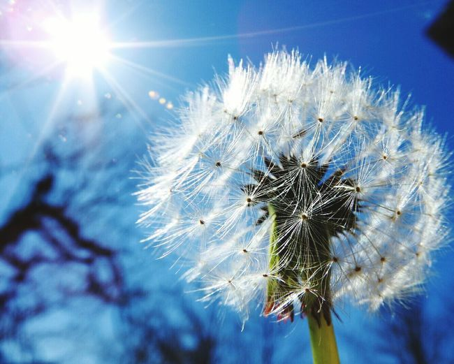 Soffione Hanging Out Taking Photos Hello World Relaxing Hi! Enjoying Life Dandelion In Sulight Dandelion Seed Head Dandelion In The Sky Dandelion Fly Away Soffione Taking Pictures Springtime Flowers