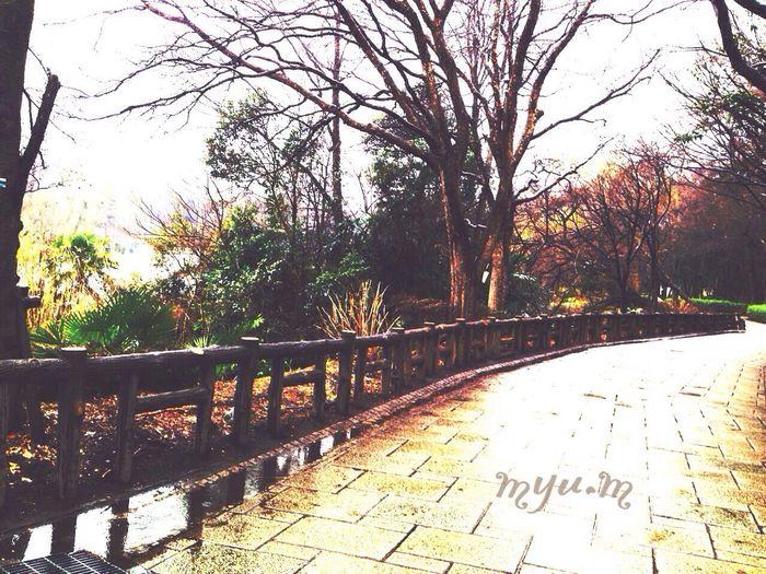いつかの雨の日。 光る道をひとり歩いて思うこと……向き合える自分見つめて*♪〜 Thank You ❤ Tokyo,Japan 繋がる空から未来へ EyeEm Gallery Japan On The Road 自分 World Peace Myumizuki