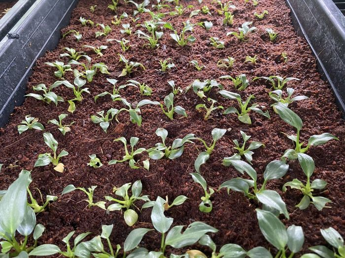 High angle view of potted plants growing on field